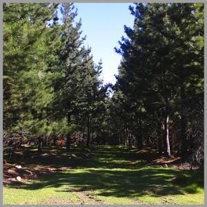 Bosques de Peteroa